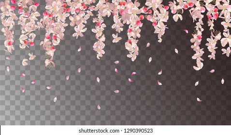 Vector floral background with plum or cherry blossom. Pink hanging flowers and falling petals