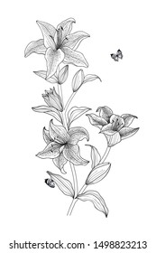 Vector floral botanical line illustration black and white Tiger Lily flowers and butterflies for decoration