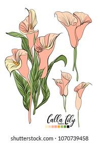 Vector floral bouquet design: garden pink peach creamy powder pale Calla Lily flower. Wedding vector invite card. Vector design element set