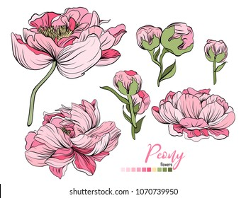 Vector floral bouquet design: garden pink peach lavender creamy powder pale Peony flower. Wedding vector invite card. Vector design element set