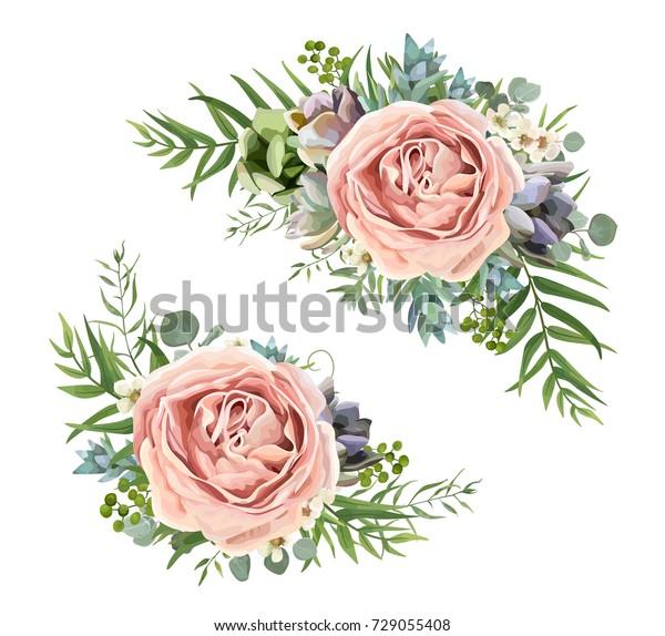 Hemerocallis (Hybrida-ryhmä) Siloam Ribbon Candy 6,40 € 1 lk.