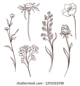 Vector floral collection. Hand drawn set Flowers and leaves. Blooming composition. Botanical illustration on a transparent background. Outline drawing. Line art. Vintage flowers.