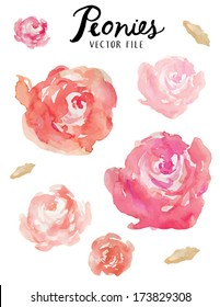 A Vector Floral Collection of Painted Pink Watercolor Peonies Flowers
