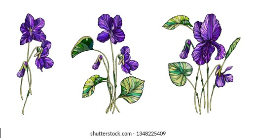 Vector floral composition of flowers of violets. Violet fragrant.