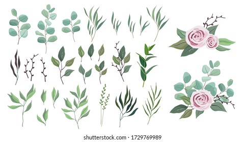 Vector floral greenery collection. set with eucalyptus silver dollar, rosemary, olive branch, fern