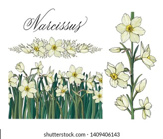 Vector floral illustration. Narcissus flowers. Endless pattern brush. Template for romantic and wedding design, posters, greeting cards. Narcissus hand written in copperplate script.