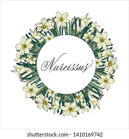 Vector floral illustration. Narcissus flowers.  Template for romantic and wedding design, posters, greeting cards, announcements, advertisement. Narcissus hand written in copperplate script.