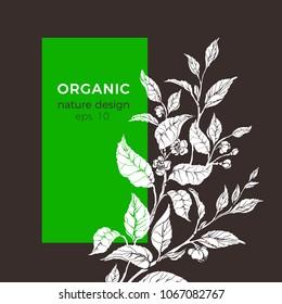 Vector floral illustration with tea leaf, flower. Botanical shape natura background. Organic template, vegetarian banner. Can be use for menu, medicine label, packaging, farm market food, fresh drink