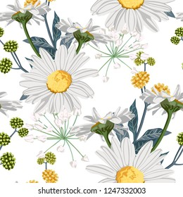 Vector floral seamless pattern with summer yellow herbs and chamomile (camomile) flowers. White background.