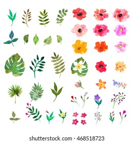 Vector floral set. Colorful floral collection with isolated leafs and flowers, drawing watercolor. Design for invitation, wedding or greeting cards
