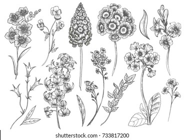 Vector floral set  flowers hyacinth, primula, bell and pansies, spring  ink drawing, imitation of engraving, hand drawn