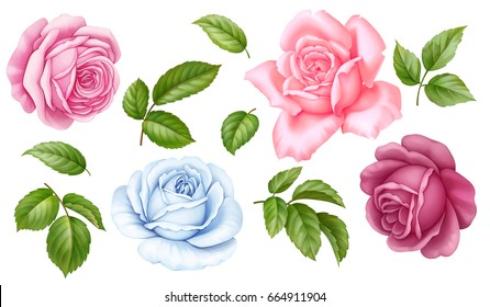 Vector floral set of pink, red, blue white vintage rose flowers green leaves  isolated on white background. Digital watercolor illustration.