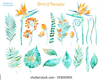 Vector floral set.Colorful floral collection with tropical leaves and flowers strelitzia,drawing watercolor. Tropical set leaves. Set of floral elements for your compositions.