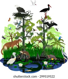 vector Florida Everglades landscape with different wetland animals