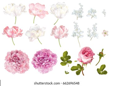 Vector flower elements set isolated on white background. Tulip, peony, rose flowers and leaves. Romantic design  elements for greeting cards, cosmetic, wedding invitations.