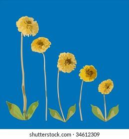 Vector Flower Family