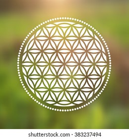 Vector Flower of Life Symbol on a Natural Background