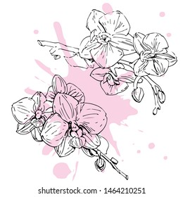 Vector flower of orchid. Ink illustration isolated.