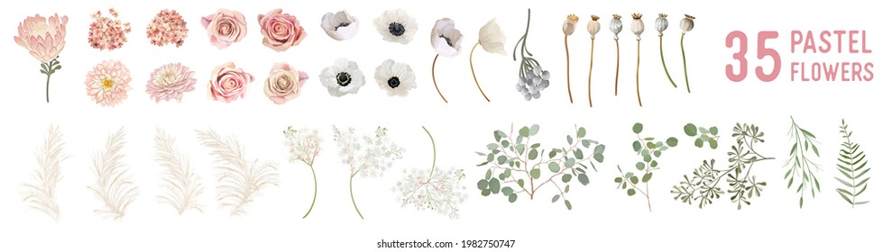 Vector flowers and leaves, dried anemone, wedding roses, pampas grass, eucalyptus greenery. Watercolor pastel floral elements Design.  Blossoms isolated illustration set