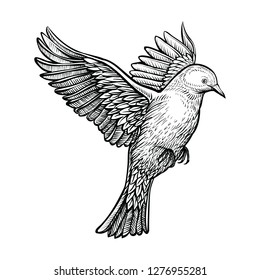 Vector flying pigeon. White dove isolated on white background. Black sketch of bird. Line hand drawn illustration.