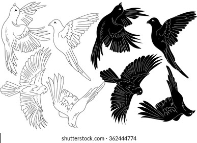 vector flying shapes of birds logo collection
