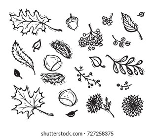 Vector Food. Autumn Harvest symbols. Hand Drawn Doodle Different Tree Leaves, Chestnuts, Flowers and Berries. Happy Thanksgiving Day Greeting card template