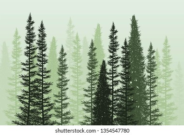 vector forest background. green spring or summer woods, nature landscape with evergreen coniferous trees. morning woodland scene illustration