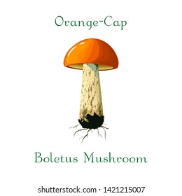 Vector Forest edible mushroom. orange-cap boletus illustration. hand drawn orange-cap boletus isolated on white background. Vector orange mushroom. Great for menu, label, product packaging, recipe.