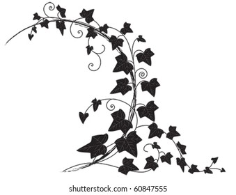 vector frame with branch of ivy