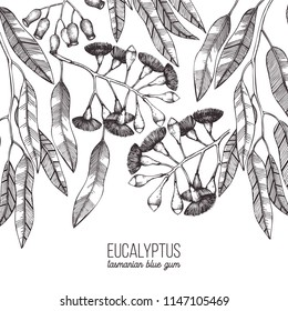 Vector frame with hand draw Eucalyptus drawings. Tasmanian blue gum with leaves, flowers, berries sketches. Wedding botanical illustration. Vintage tree design template.