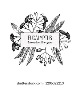 Vector frame with hand draw Eucalyptus drawings. Tasmanian blue gum with leaves, flowers, berries sketches. Wedding invitation and greeting card. Vintage tree design template on white background