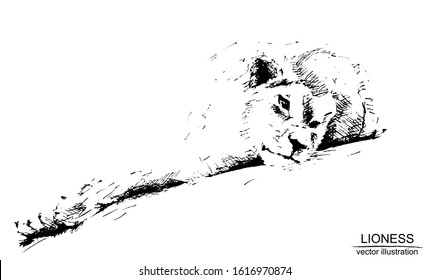 Vector frame with hand drawn lioness on white background. Black and white sketch with line art.