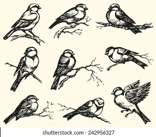 "Vector freehand drawing of series of monochrome sketches ""Birds"". Tits, chickadees, sparrows, bullfinches and titmice constitute Paridae, a large family of small passerine birds"