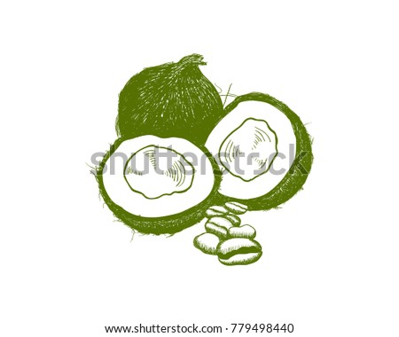 Vector Fresh Green The Coconut Fruits And Coffee Bean Hand Drawing Logo Symbol
