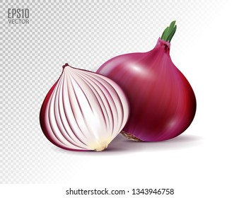 Vector fresh whole and half red onion bulbs on transparent background. Realistic vector, 3d illustration