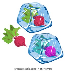 Vector Frozen beetroot in ice cube isolated on white background EPS 8