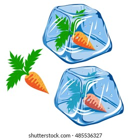Vector Frozen carrot in ice cube isolated on white background EPS 8