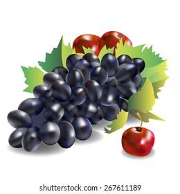 vector fruit food grape vine fresh nature