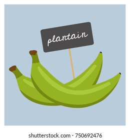 Vector Fruit - Plantain