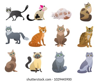 Vector Funny and cute cartoon Cat different breeds pet characters set.