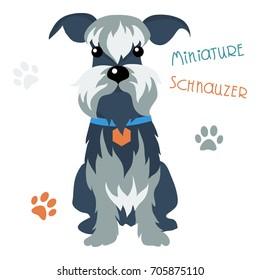 Vector Funny dog Miniature Schnauzer breed sitting