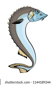 Vector funny stylized illustration of European sturgeon (Huso huso)