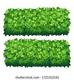 Vector garden bush isolated shrub hedge. Green bush cartoon grass shrubbery plant