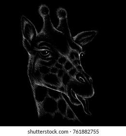 The vector giraffe t shirt designe.