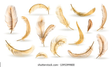 Vector gold feathers collection, set of different falling fluffy twirled feathers, isolated on white, transparent background. Realistic style, colorful vector 3d illustration.