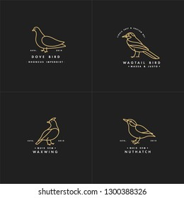 Vector golden color illustration set of birds - pigeon, nuthatch, waxwing, wagtail in trendy linear style. Logo or label icon