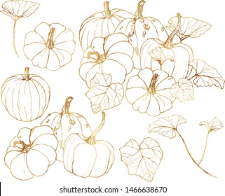 Vector golden gourds set. Hand painted pumpkins with leaves and branches isolated on white background. Harvest festival elements. Botanical line art illustration for design, print or background.