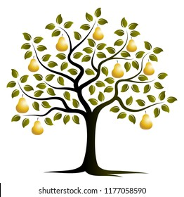 vector golden pear tree isolated on white background