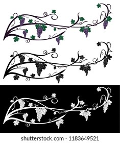 Vector grape rambling vine with grape berries, leaves. Grape vine of violet and green colors, isolated on black and white. Fruit design element for resaturant menu