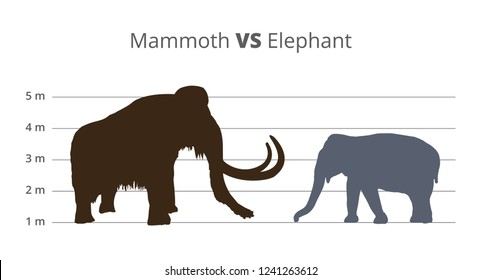 Vector graph or infographics comparing the height and size of mammoth and elephant with units of height. Mammoth vs elephant in a brown and grey colors. Illustration is isolated on a white background.
